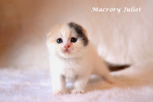 http://www.macrory.ee/public/galleries/J-litter/Macrory_Juliet_7_weeks_3.jpg